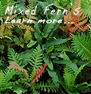 Mixed Ferns